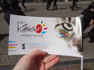 Cat Festival (42)